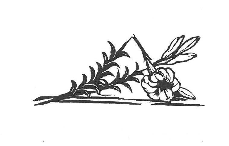 Image - Une fleur épanouie mais brisée