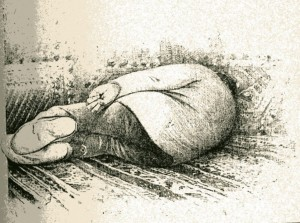 dessin 21 Zola à la sieste